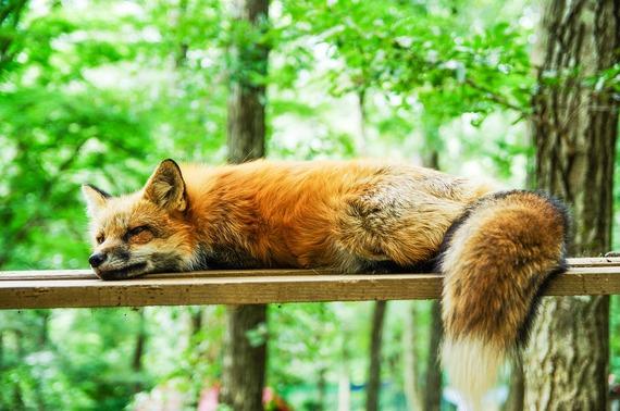 2016-07-19-1468932877-2042314-fox1.jpg