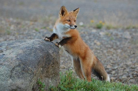 2016-07-19-1468932928-6962302-fox2.jpg