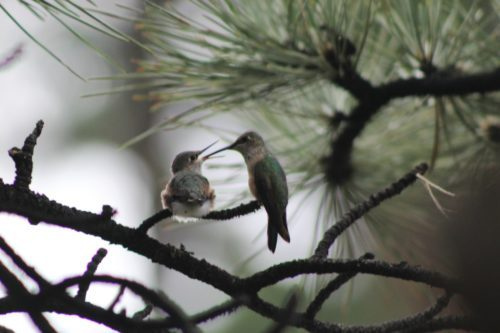 2016-07-21-1469127981-4749870-HummingbirdsEklund.jpg