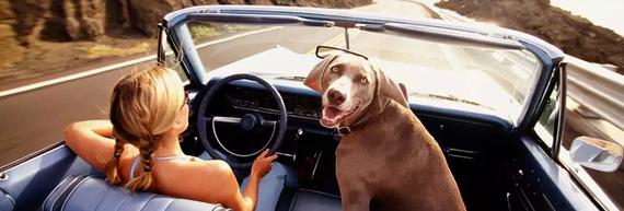 2016-07-22-1469227851-9690651-doggiecar.jpg
