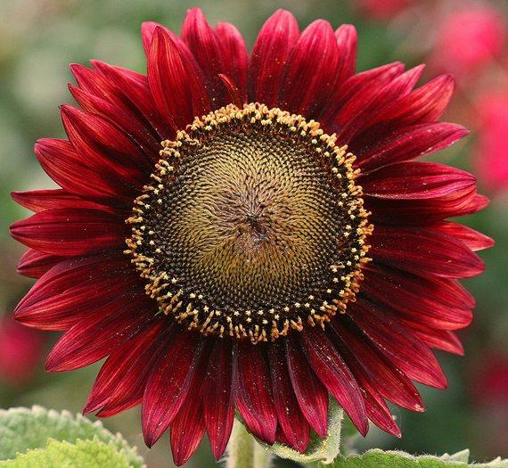 2016-08-04-1470317279-711428-Flower.jpg