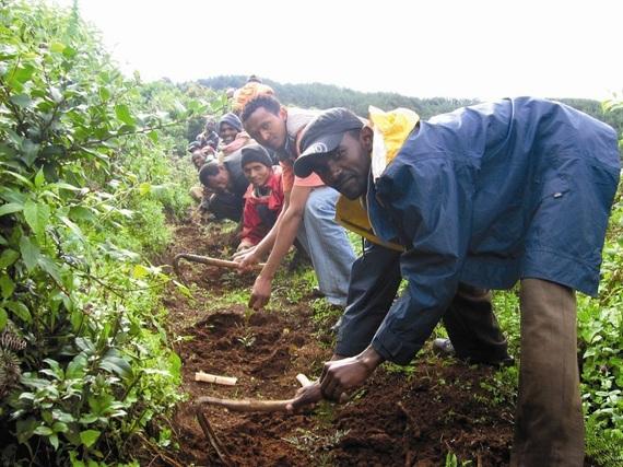 2016-08-04-1470342165-8974249-EthiopiaHumbomenplanting.jpg