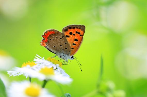 2016-08-05-1470398882-5696742-butterfly.jpg