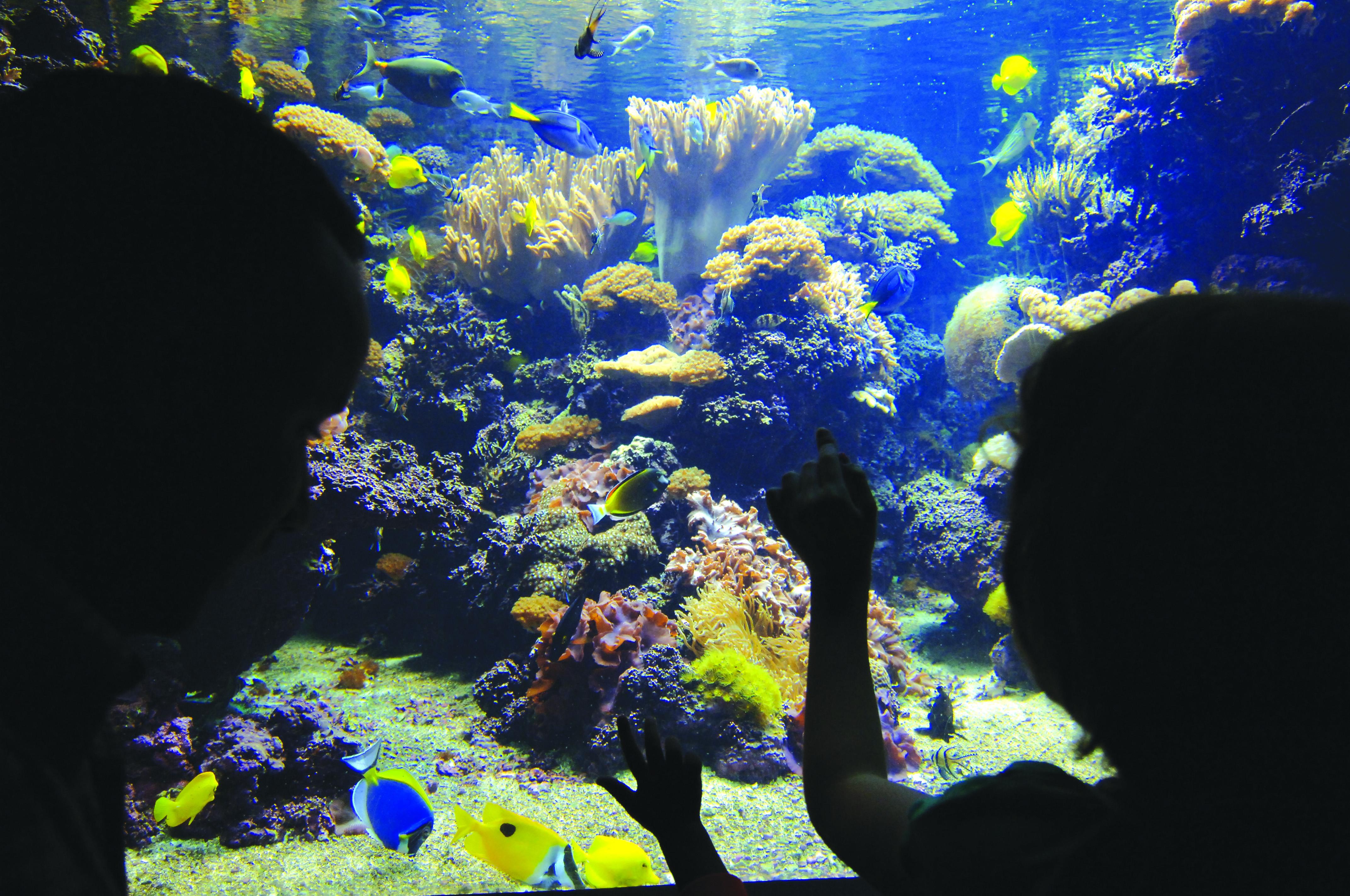Aquarium Scenes Related Keywords & Suggestions - Aquarium Scenes Long ...