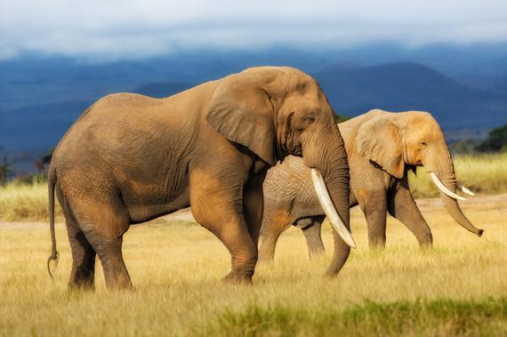 2016-08-11-1470915041-5262085-elephants.jpg