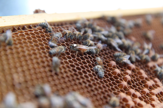 Bees are some of the hardest working creatures on the planet, and they're amazing team players who put the needs of the colony above those of individuals.