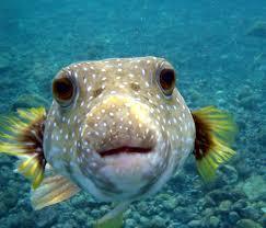 2016-08-23-1471953931-9314546-fish.jpg