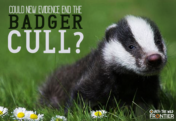 2016-08-23-1471964922-8992940-badgercull.png