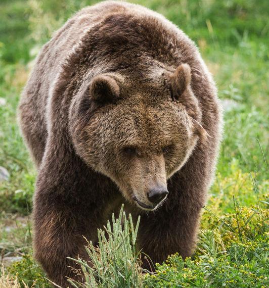 2016-08-24-1472079723-3231423-bear_cropped.jpg