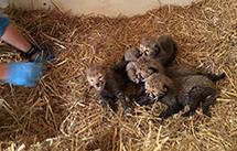 2016-08-25-1472148518-1379615-cubs5.jpg