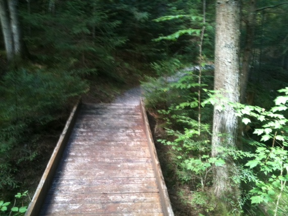 A walk in the forest essay