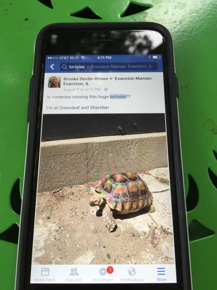 2016-08-31-1472659601-2583164-tortoiseFB.jpg