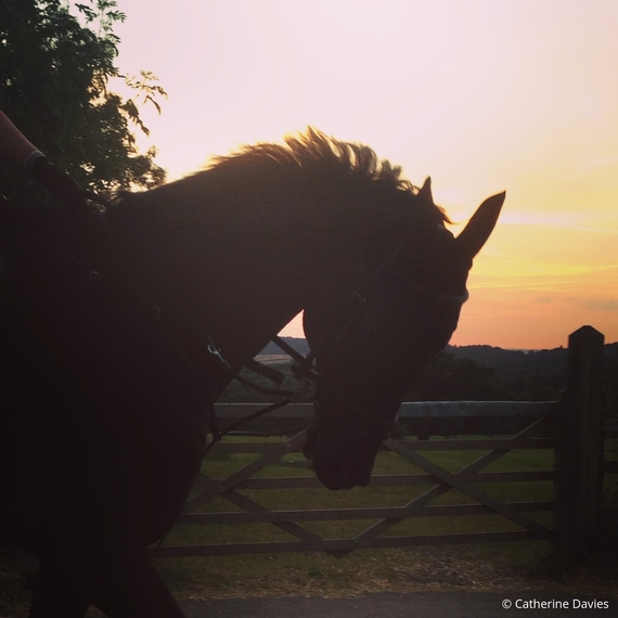 2016-09-02-1472836503-1078680-horsesunset.jpg