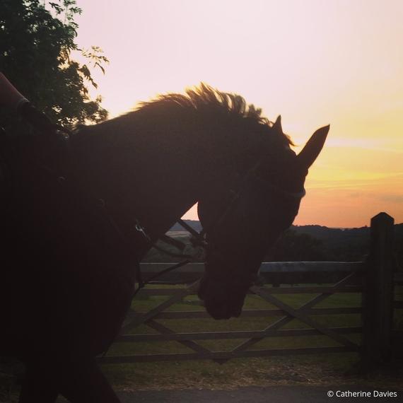 2016-09-02-1472836503-1078680-horsesunset.jpg