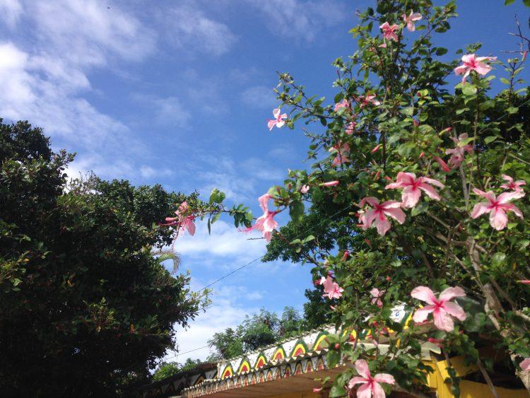 南国感あふれる花たち