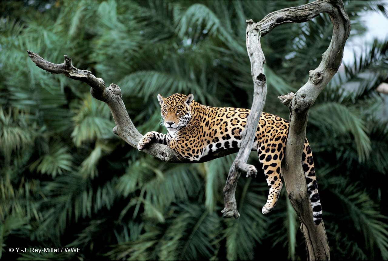 Conservation Latin America 68