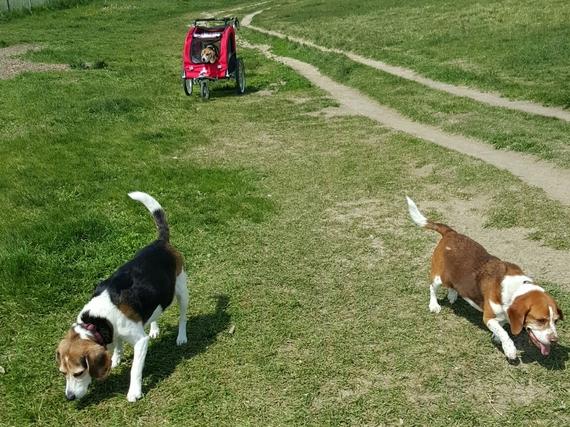 2016-09-08-1473315335-5606269-dogparksroller.jpg
