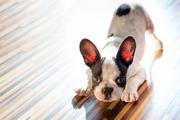 2016-09-08-1473323099-4551562-puppyPatrykKosmider.jpg