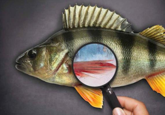 2016-09-08-1473341795-8876901-seafoodfraud.PNG