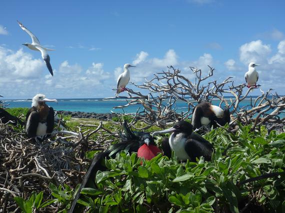 2016-09-08-1473344530-1946203-Greatfrigatebirdsandredfootedboobies.jpg