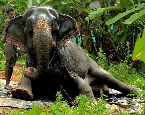 2016-09-12-1473647477-1971191-Elephant.jpg