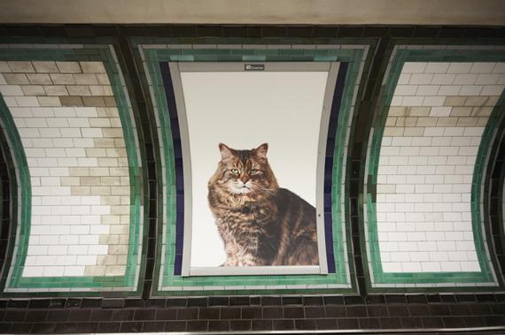 2016-09-14-1473813727-475128-Catsnotads.jpg