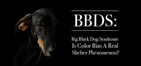 2016-09-14-1473866927-2517265-BannerBlackDogSyndrome.jpg