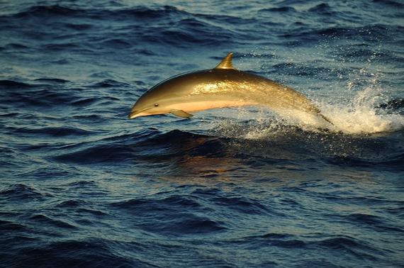 2016-09-15-1473966396-3896492-Dolphin_Dominica.jpg