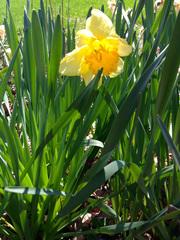 2016-09-19-1474316134-574982-Tulips.jpg