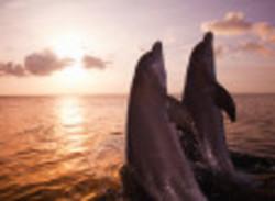 2016-09-21-1474489743-9699011-dolphins.jpg