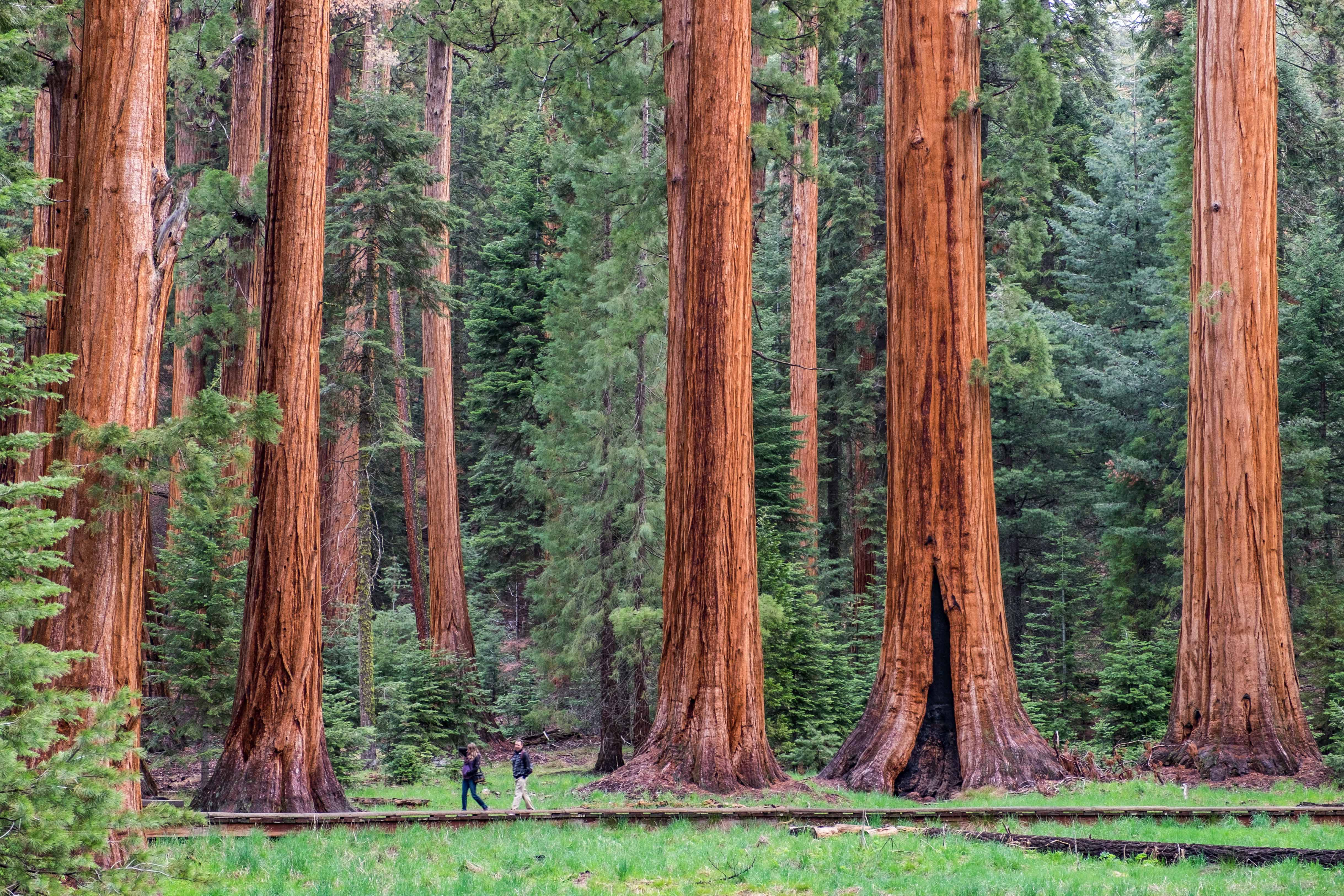 Best Scenic Drives In Usa Must See Stops In Sequoia And Kings Canyon National Parks