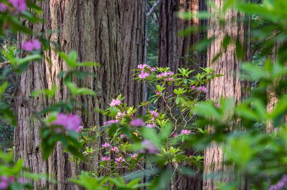 2016-10-05-1475634552-3517617-RedwoodsNationalPark024.jpg