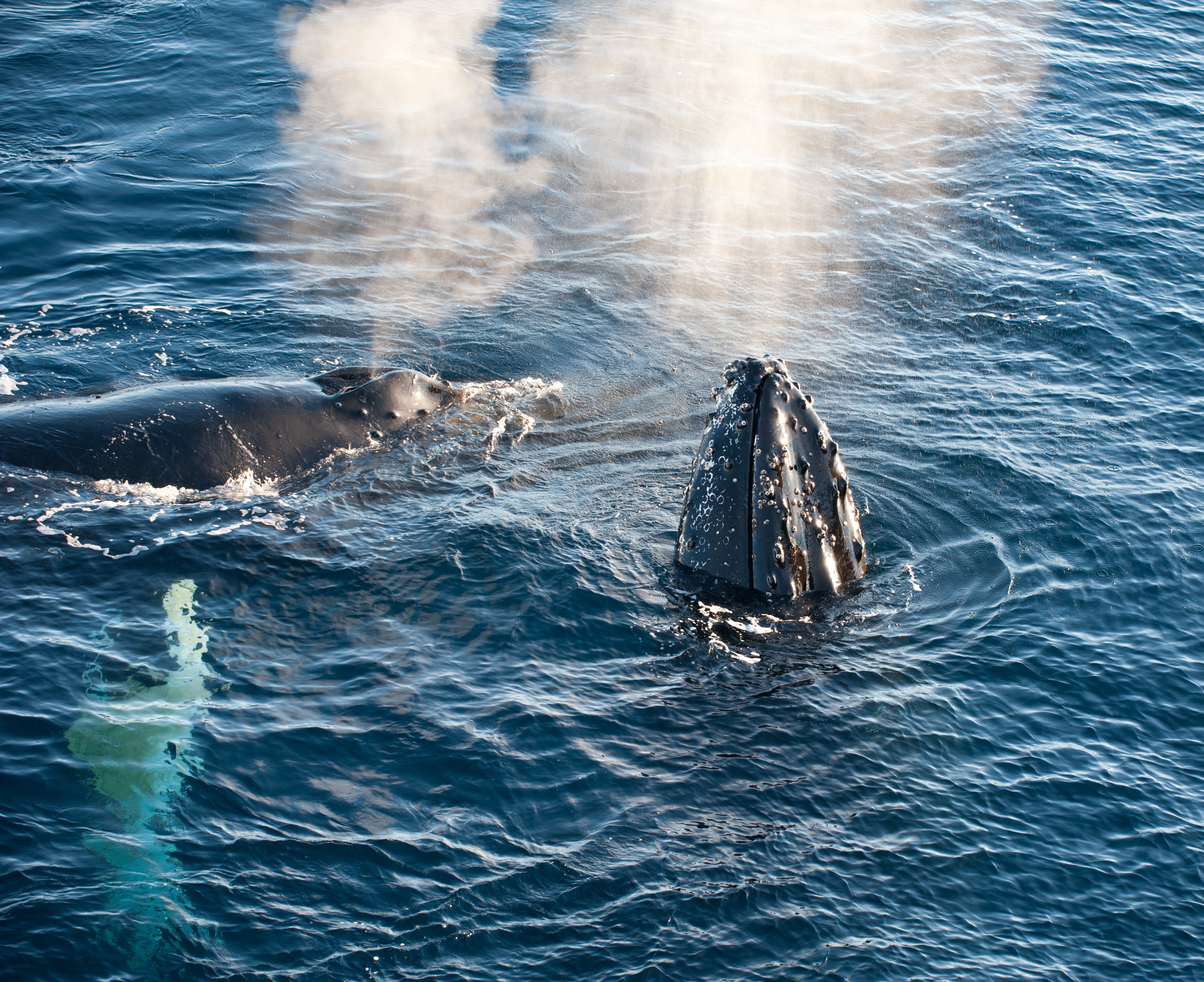 Humpback Whale Migration Qoute: 11 Inspirational Photos And Quotes About Antarctica, The
