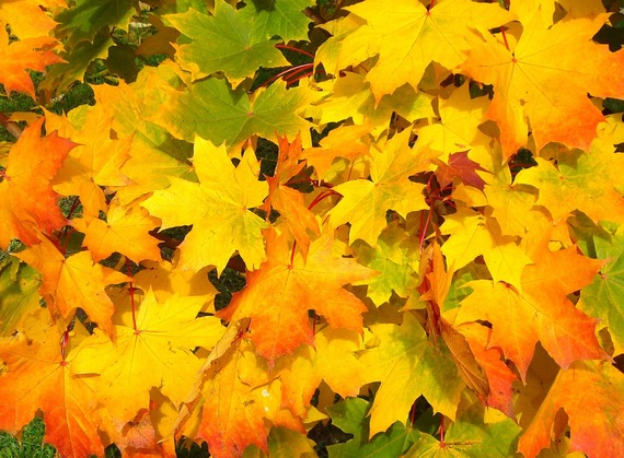 2016-10-05-1475696146-4730083-fall_autumn_leaves.jpg