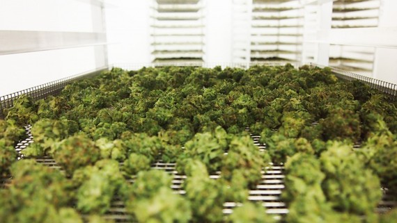2016-10-05-1475711965-4798033-emblemmedicalcannabismarijuanalpcanada11.jpg