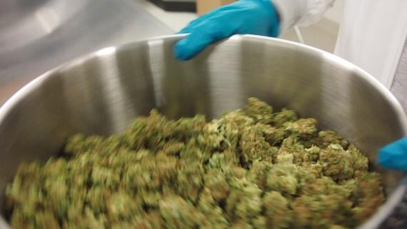 2016-10-06-1475712067-1469610-emblemmedicalcannabismarijuanalpcanada161024x577.jpg
