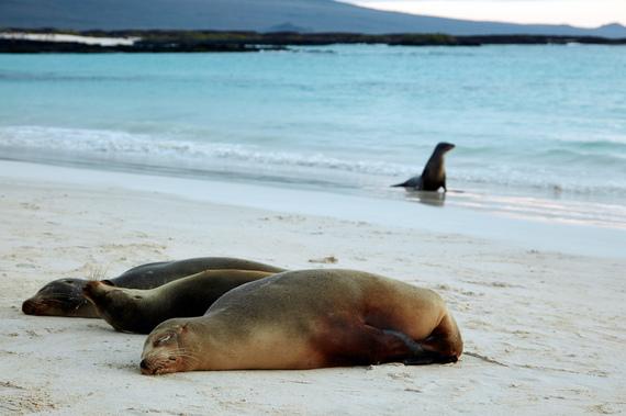 2016-10-06-1475782443-4985409-GalapagosCreditDanielCorreia.jpg