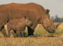 2016-10-26-1477513879-7004576-rhino.jpg