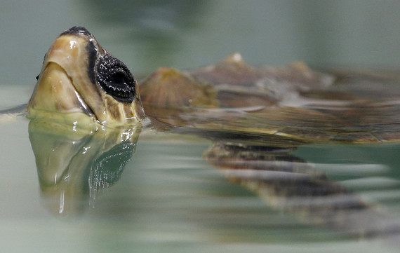 Saving Mexicos endangered sea turtles will be good for tourism too