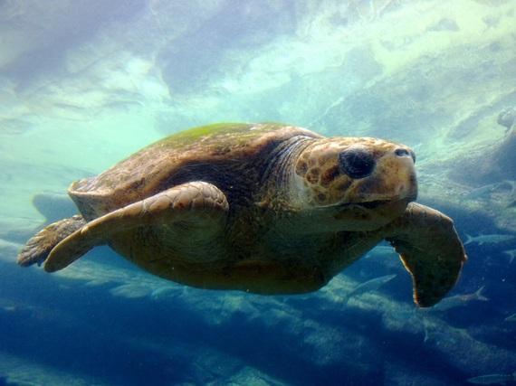 2016-10-27-1477561957-1955298-turtle1409026.jpg