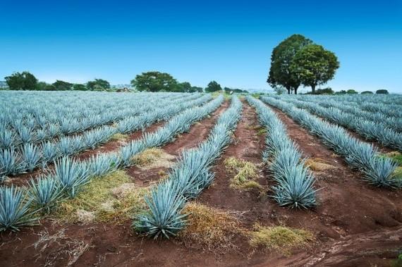 2016-10-28-1477681715-2892360-tequila.jpg
