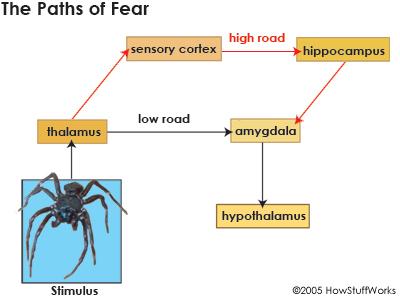 2016-11-02-1478108241-2934232-fear7.jpg