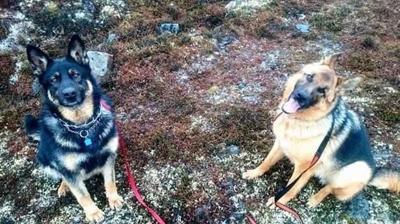 2016-11-02-1478116373-711980-3.DogsattheIqaluitHumaneSocietyGetLeashedMag.jpg