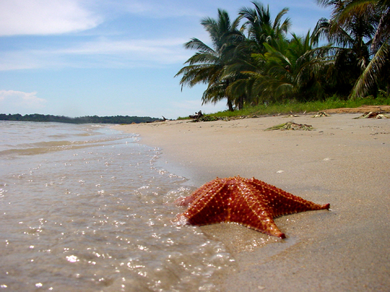 2016-11-03-1478196402-4346835-1.StarfishBeachs.jpg