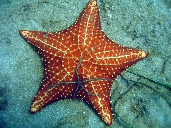 2016-11-03-1478196670-7082854-starfishstarfishcopy.JPG