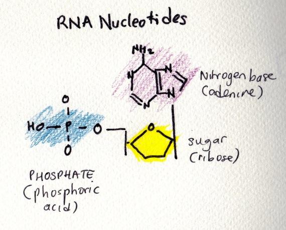 2016-11-07-1478516121-2114522-RNA.jpg