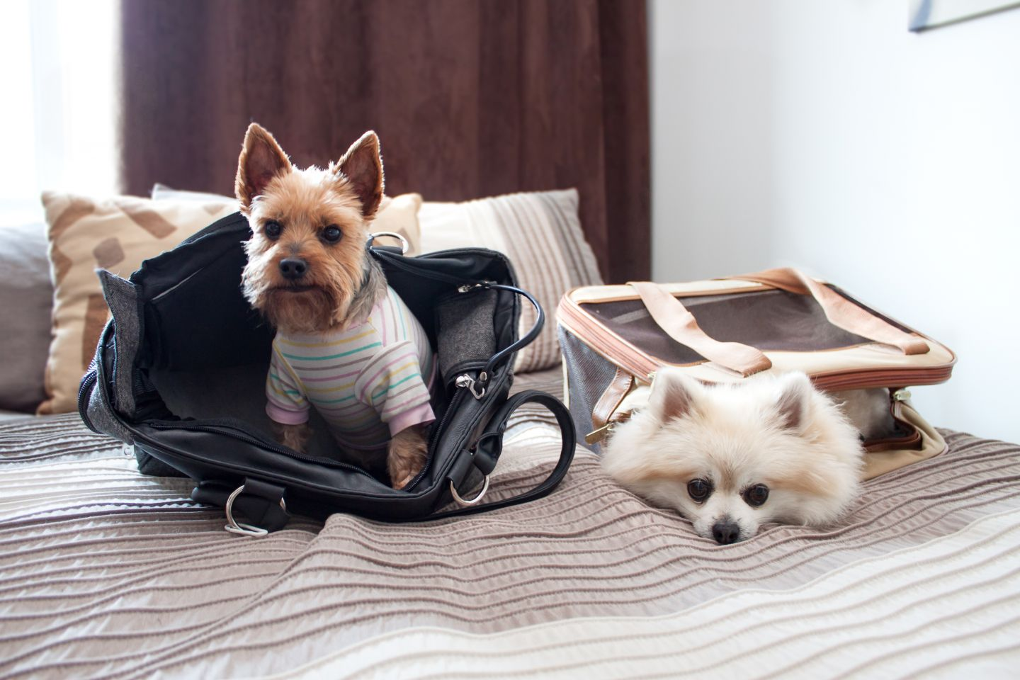 Westjet Walks Back Pricey Policy On Shipping Rescue Dogs Into Canada The Mazatlan Post