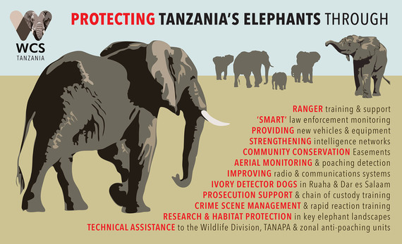 2016-11-10-1478795930-1316769-protectingelephantsintanzania.jpg
