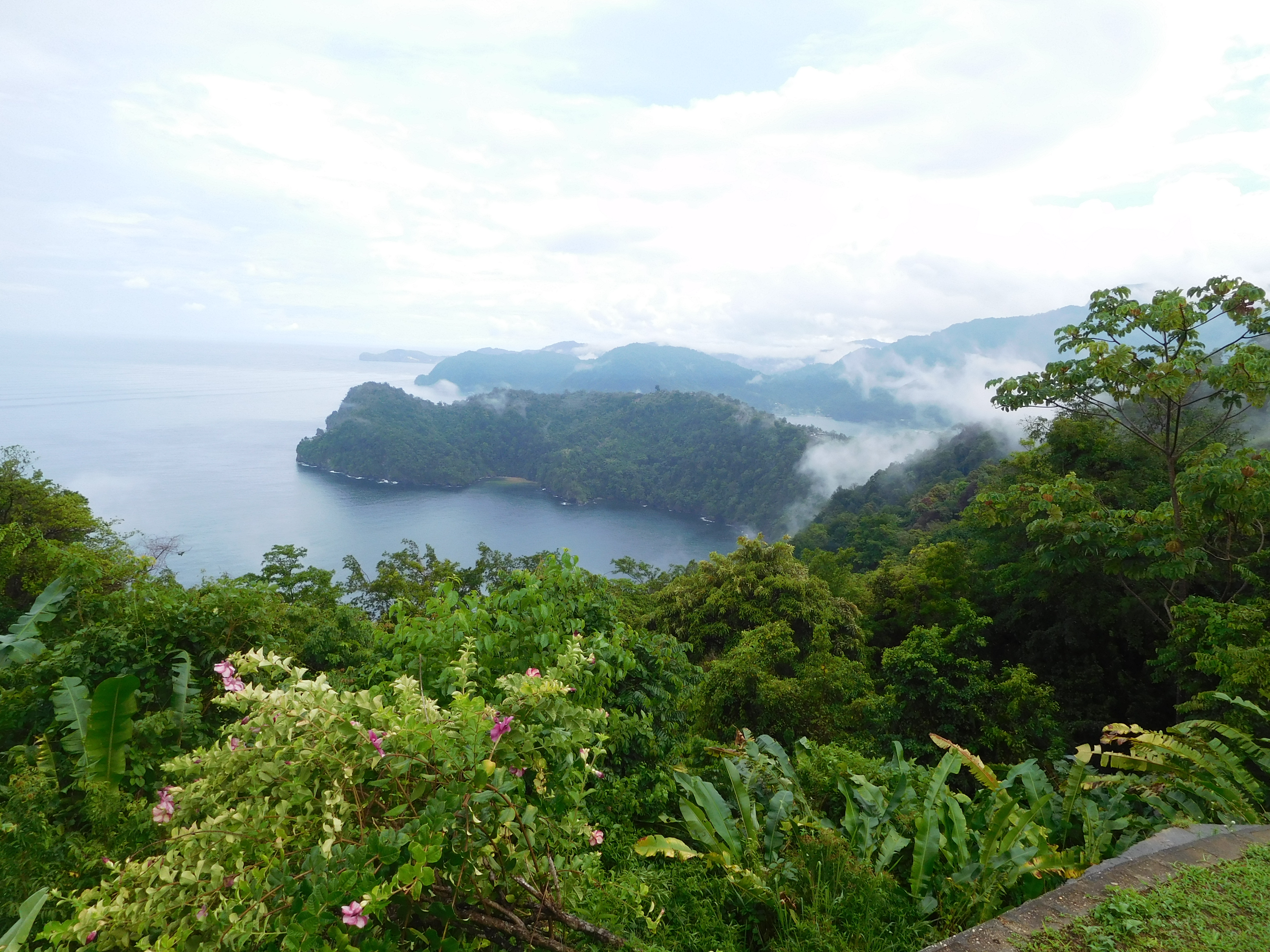 The Magnificent Rain Forests of Trinidad's Northern ...