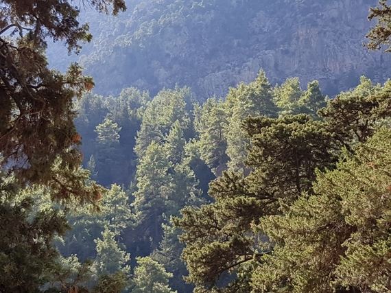2016-11-28-1480344818-2063322-Hiking_Samaria_Gorge_Crete_5_view_of_trees.jpg